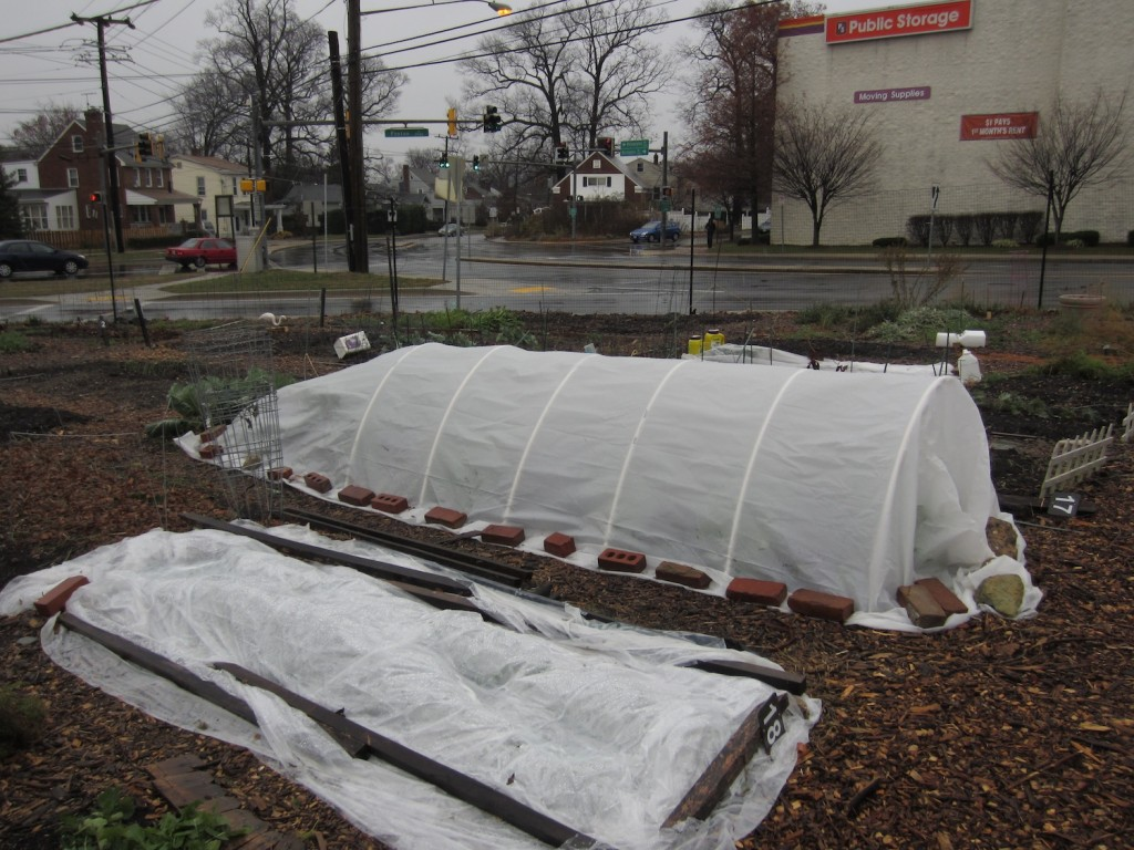 who the heck says you can u0027t grow veggies in the dead of winter